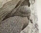 Pheasant Bird engraving, 1887 antique Natural History Print, vintage victorian art