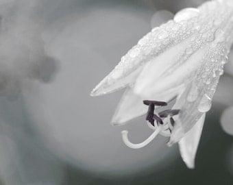 White Morning Photo