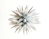 Silver Christmas Star Ornament Holiday Home Decor Ball Spiky Modern Paper Sphere Christmas Tree Decoration Urchin - Sterling Silver, 3 inch