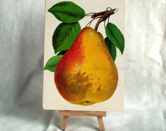 Antique Print of a Pear on Panel - 1890 Fruit Chromolithograph - Ready to Display