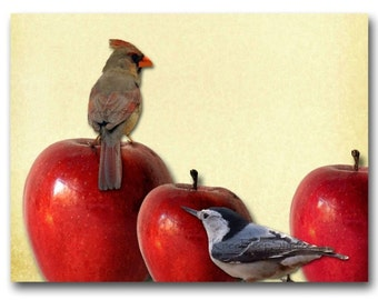 Birds and Apples 8x10 fine art photographic collage Kitchen decor red fruit cardinal nuthatch original modern unique cheerful rustic home