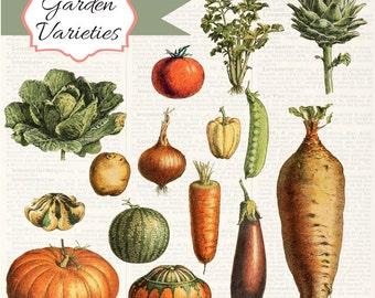 Vintage Vegetables Digital Clipart Set