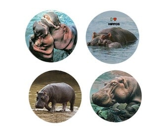 Hippopotamus Magnets:  4 Charming Hippos for your home, your collection,  or to give as a unique gift