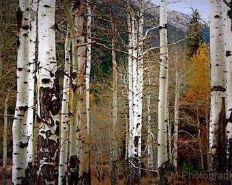 Aspen - Aspen Photography - Nature - Fine Art Photography - Mountains -
