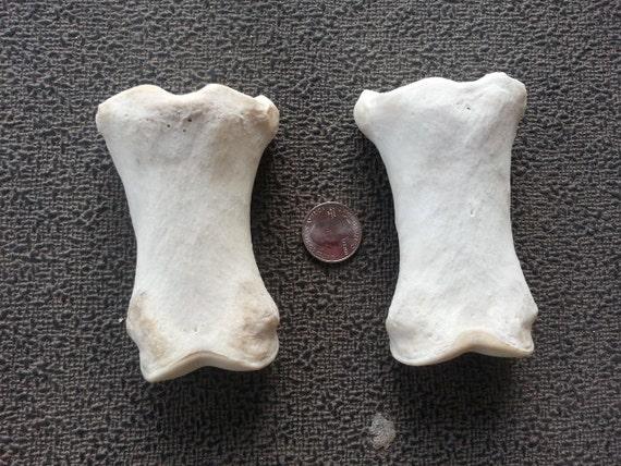 One Horse Long Pastern Bone Leg Bone Real Bone