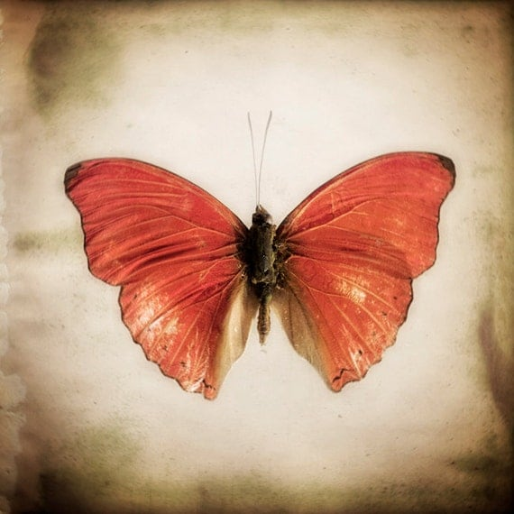 https://www.etsy.com/listing/155809148/christmas-red-butterfly-photograph?ref=shop_home_feat
