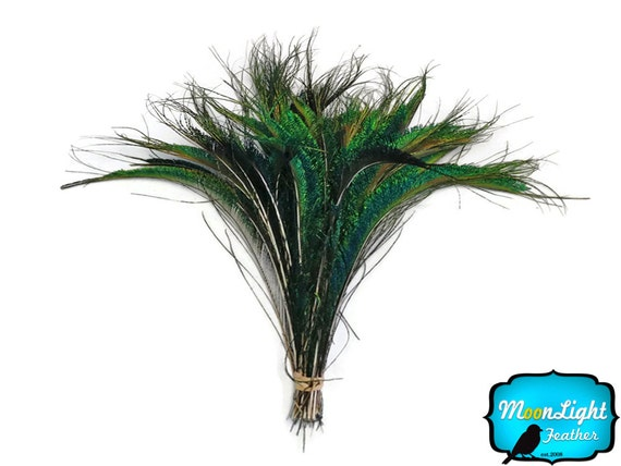 Peacock Feathers, 50 Pieces - Natural Peacock Swords Cut Wholesale Feathers (bulk) : 3248