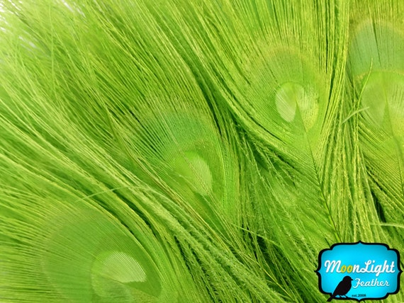 Peacock Feathers, 5 Pieces - LIME GREEN Bleached and Dyed Tails Peacock Feathers : 263