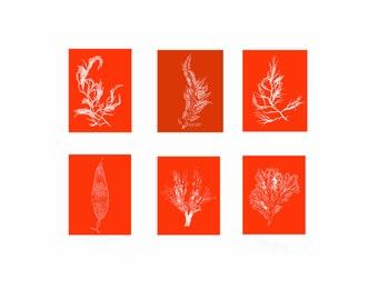 Set of Six, Seaweed Print Vibrant Red Orange Botanical Artwork, Ocean, Coastal Living, Beach, Wall Decor, Matted Print