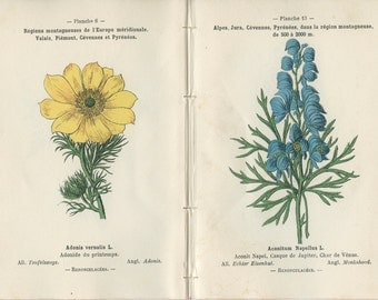1898, Sulfer Anemone, Yellow Monkshood, Adonis, Blue Monkshood, French Botanical Book Plate, 5, 14, 6, 13