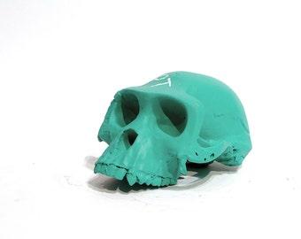 Ardi chalkboard skull