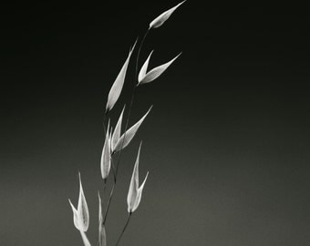 Summer Grass Photograph, Black And White Home Decor, Nature Art, Zen Photo, Peaceful Tranquil Wall Decor, Minimalist Photography