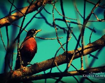 Robin Photograph, Bird Home Decor, Nature Photography, Blue Red Wall Decor, Spring Art