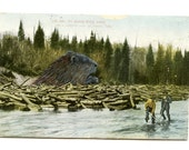 Look out for the Log Jam Beaver Postcard