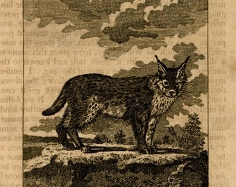 1808 the lynx original antique animal engraving print