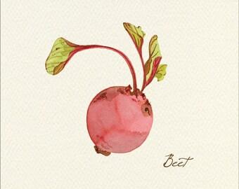 Beet Unframed Watercolor Art Print