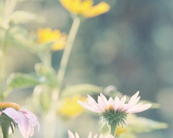 Summer Flower Photograph yellow teal blue green pink garden morning light sunny black eyed susan daisy cone flower dreamy cottage chic