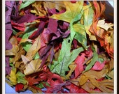 500 Fall Wedding Leaves with REAL soft PRESERVED leaves in many beautiful Colors