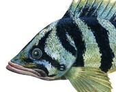 "Treefish, original gouache painting print, printed on EPSON watercolor paper, paper size 8""x10"""