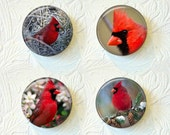 Magnets Set of 4 Cardinal Birds 1.5 inch Buy 3 Get 1 Free  317M