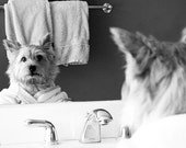 Norwich Terrier Bathroom art, black and white,  art photo, wall art, dog humor, fun art, small art, kid room art