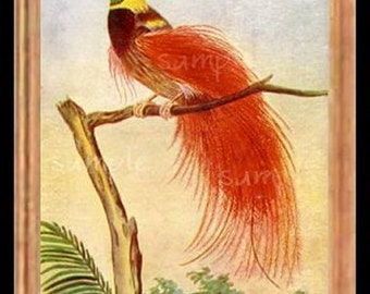 Red Bird Miniature Dollhouse Picture Art 1589