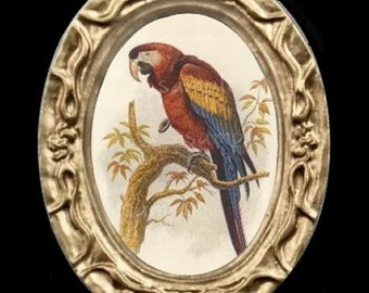 Scarlet Macaw Bird Portrait Miniature Dollhouse Art Picture 6334