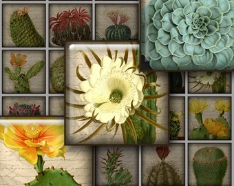 VINTAGE CACTUS 1.5 inch Squares - Digital Printable collage sheet for Jewelry Pendants Magnets Crafts...Antique Botanical Art
