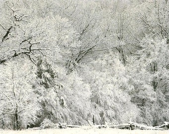 First Snow Fall Fresh Snow on Trees Nature Photography on Blank Note Card Winter Hush - Perfect All Occasion Card or Christmas Card