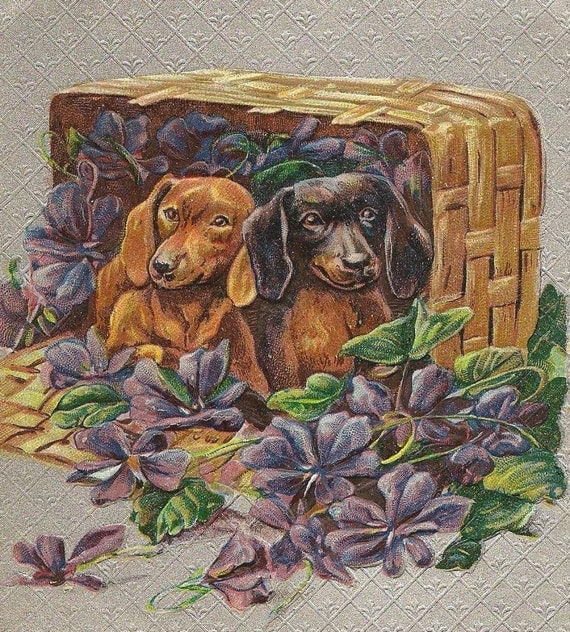 Pair of Dachshunds in Basket full of Purple Violets Best Wishes Vintage Postcard 1910