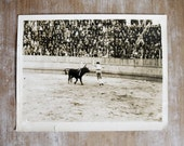 1930's original bull fighter photograph by photographer Alex Stewart known as Sasha