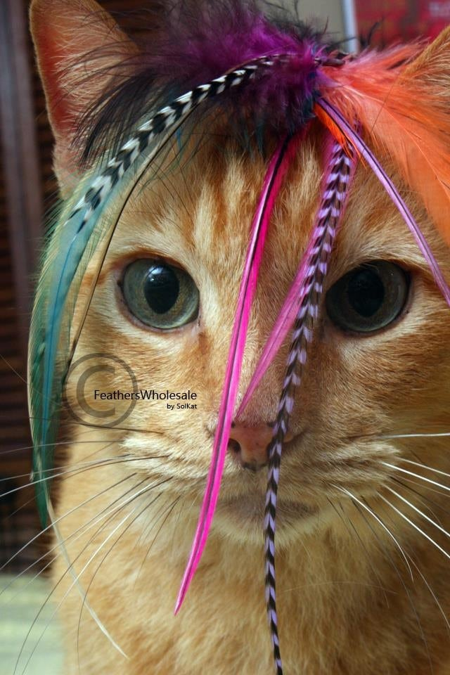 Cat feather toy pet accessories for cat toys or dog extensions zoom pmusecretfo Image collections