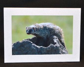 Original Photography Note Card - Mongoose 2
