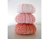 Pink Ombre Sea Urchins, Natural Shell Still Life, Macro, Modern, Minimalist, Symmetry, Harmony, FREE SHIPPING USA