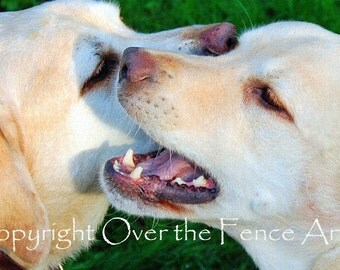 Labradors Handcrafted Greeting Card  Whisper Sweet Nothings Dog Photography