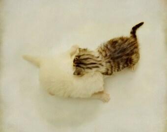 Cat photo, newborn kittens print, cat art, animal photography, fine art cat print, cat lovers wall art