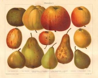 1909 Original Antique Chromolithograph of Fruits, Apples and Pears