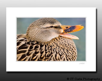 Brown Duck Photography Print - Signed Matted Print Wall art - Ready for 5x7 inch frame