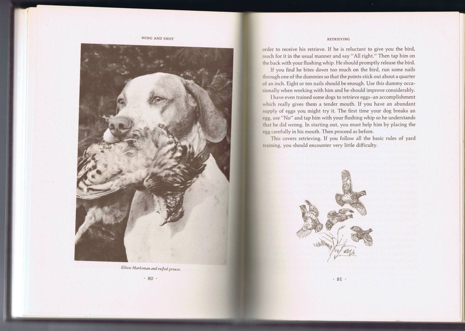 Wing and Shot Gun Dog Training Book by Robert Wehle Bxed Edition 4th Printing 1971
