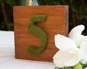 Moss number on wooden block