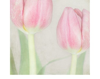 Tulip Photo, pink tulips - spring flower photo, spring,  pretty flower print, cottage home decor, still life, flowers, floral