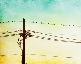 """Bird on Wire Print - yellow teal mint green photography - turquoise aqua blue - nursery wall art modern photo - 8x10 Photograph, """"Hang Out"""""""