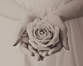 Widow - Duotone Rose Photography Print