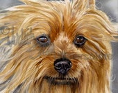 """Silky Terrier , AKC Terrier, Pet Portrait Dog Art, Watercolor Painting Print, Wall Art, Home Decor, """"Smooth as Silk"""" by Judith Stein k9stein"""