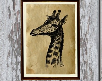 Natural history print Giraffe art Old paper home decor AK32