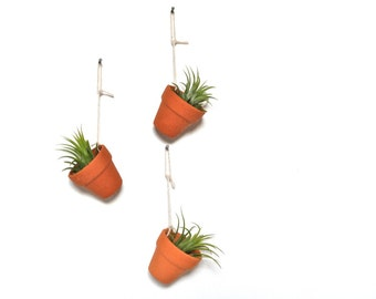 Set of Three Mini Hanging Pots with Air Plants, Hanging Air Plant Planters, Airplant Holders, Air Plants in Ceramic Pots, Wall Hanging Decor