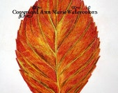 Last Dance - autumn leaf done in watercolor pencil drawing, giclee or canvas print, 8 x 10