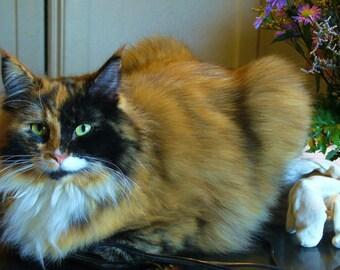 Kitty Still Life Photo Note Card