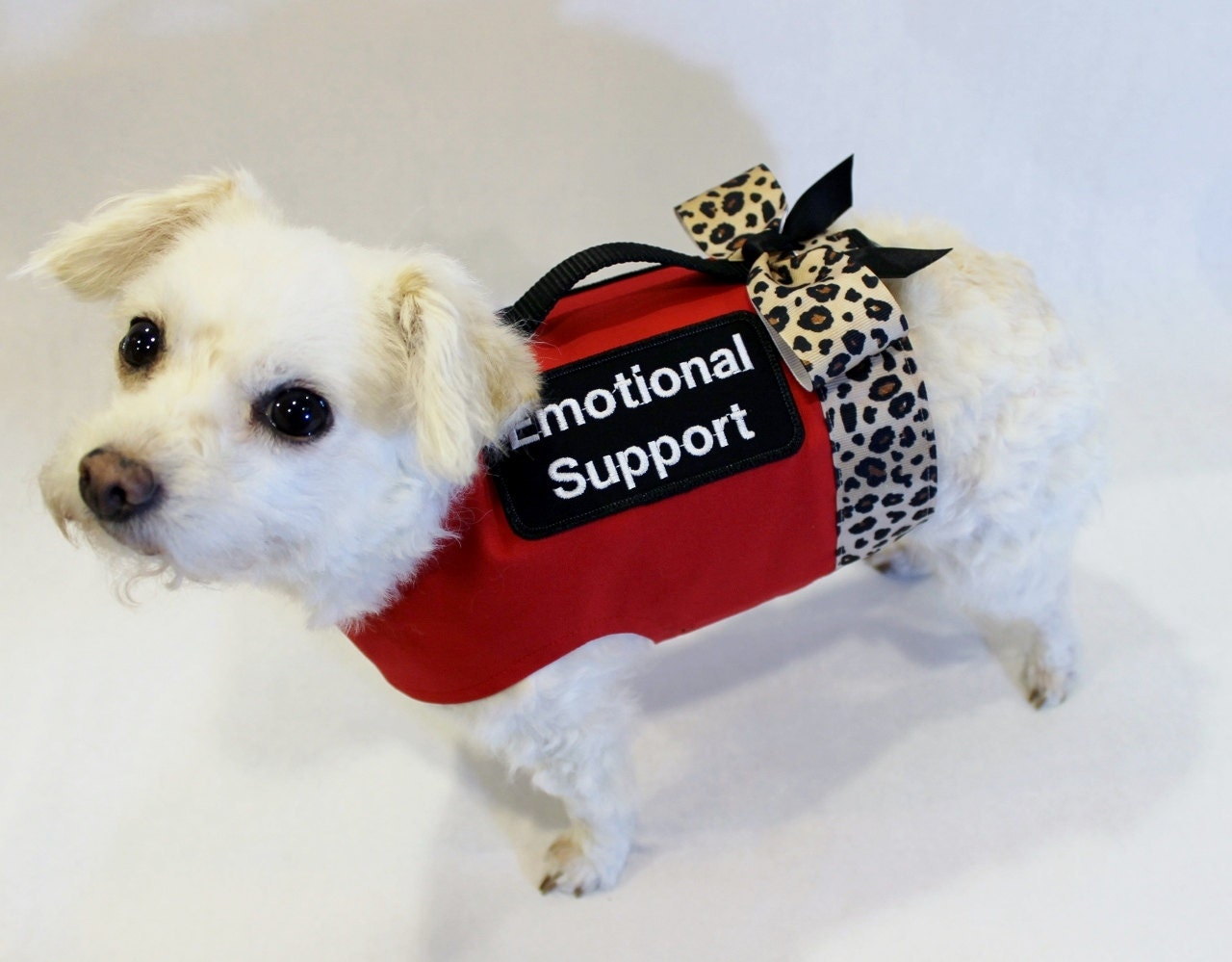 How Can I Make My Dog A Emotional Support Dog