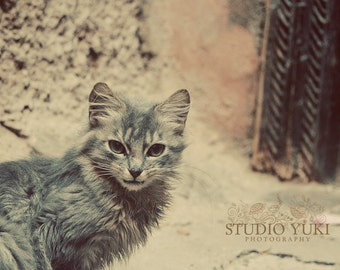 Cat Photograph, Animal Photography, Cute, Cat Lover, Feline, Whiskers, Travel Photo, Stray Cat, Morocco Print, Nature Decor, Adventurer
